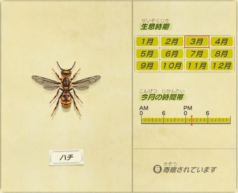 Hachi - Bee