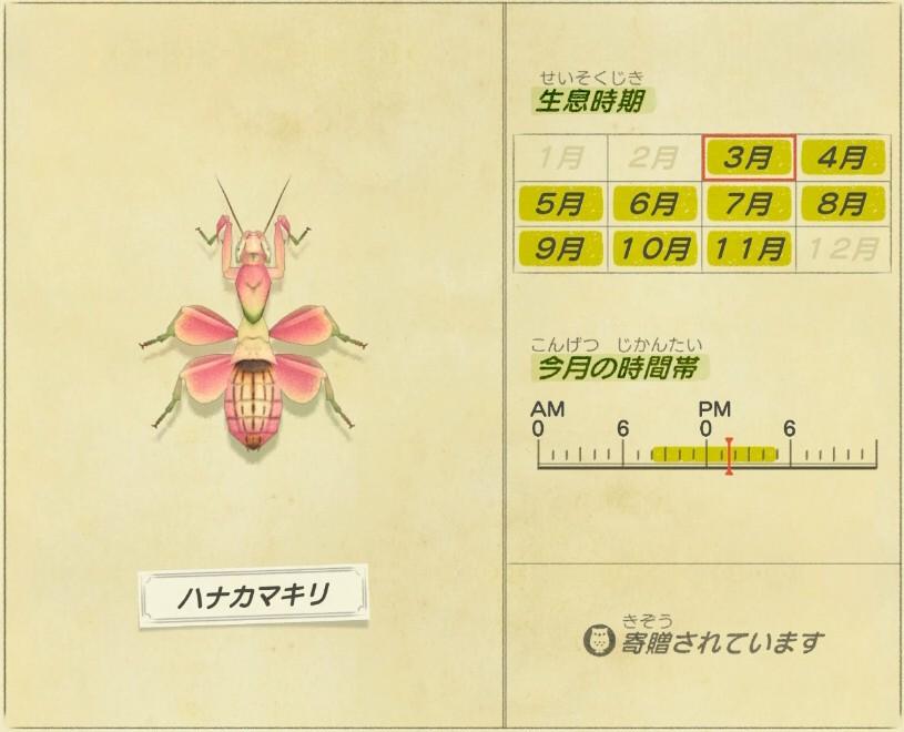 Hana Kamakiri - Orchid Mantis