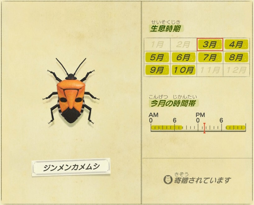 Jinmen Kamemushi - Man-faced-stink-bug