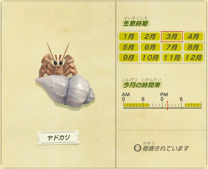 Yado kari - Hermit crab
