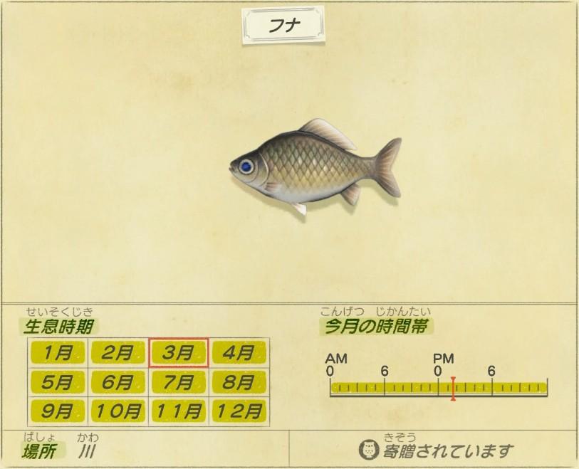 Funa - Crucian carp