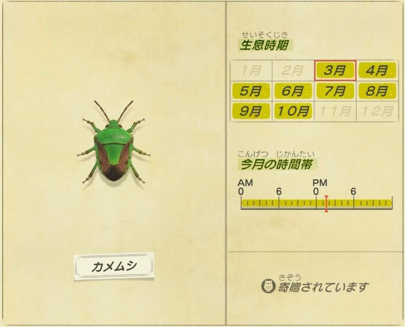Kame mushi - Stink bug