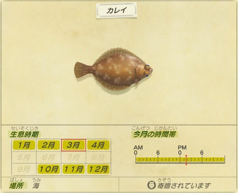 Karei - Flatfish