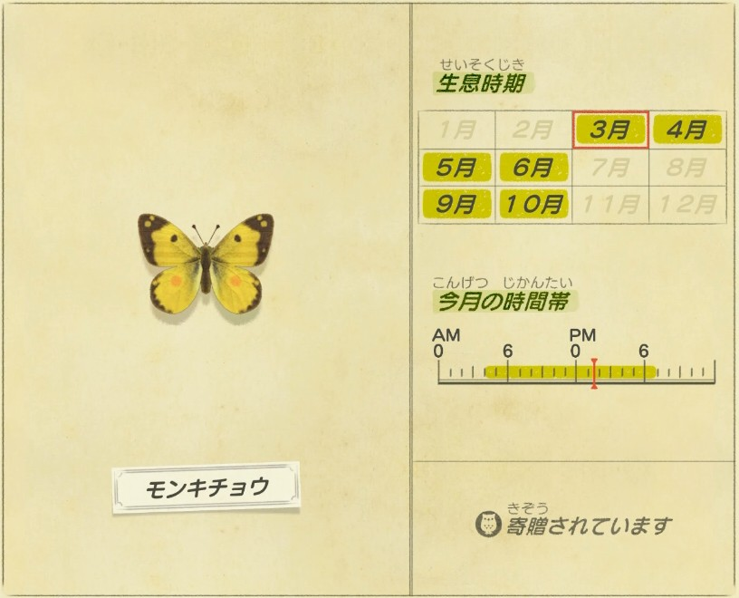 Monki chou - Eastern pale clouded yellow