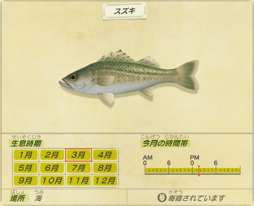 Suzuki - Sea bass