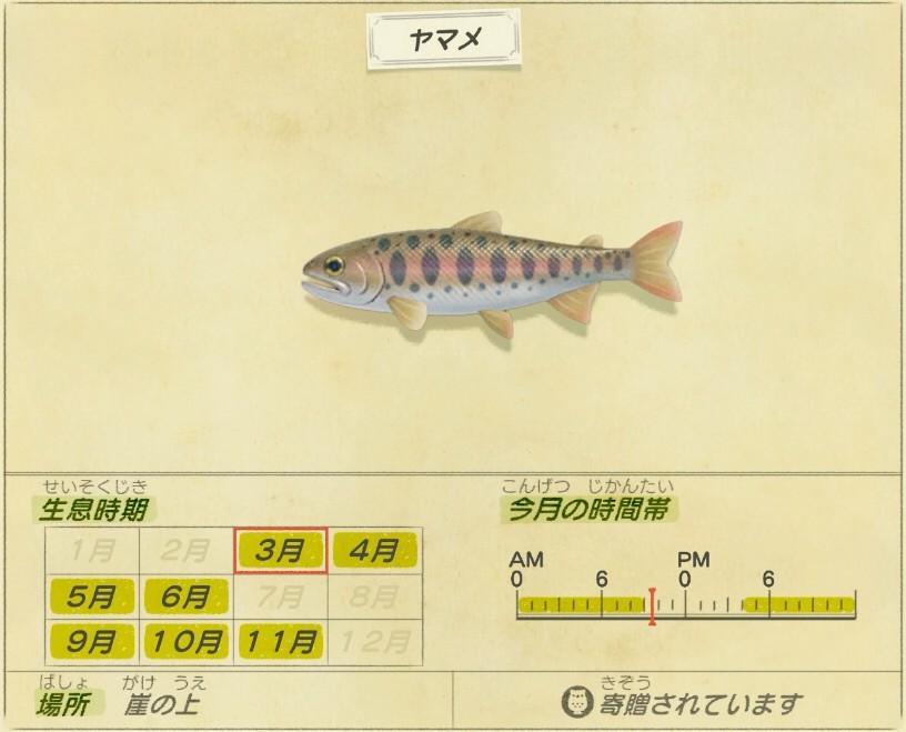 Yamame - Yamame trout
