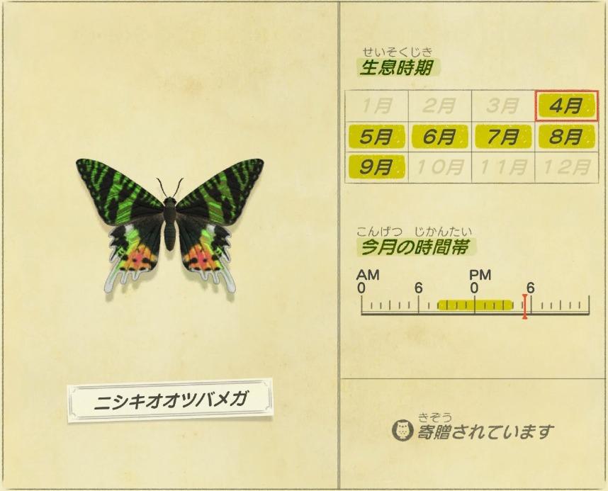 Nishiki ootsubame ga - Madagascan Sunset Moth