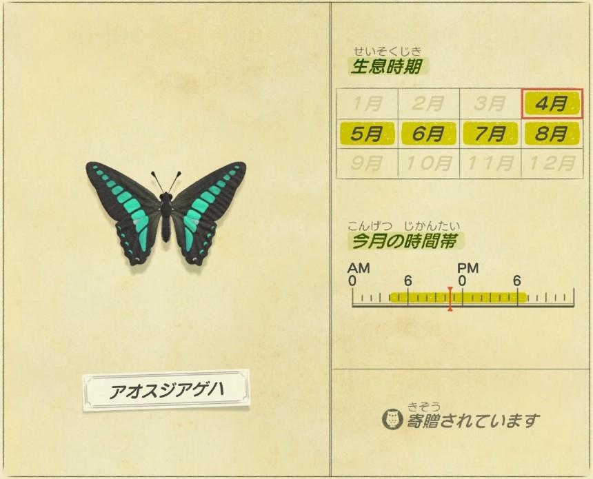 aosuji ageha - Common-Bluebottle