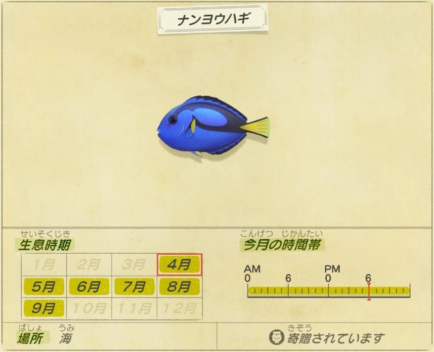 nanyou hagi - Blue tang