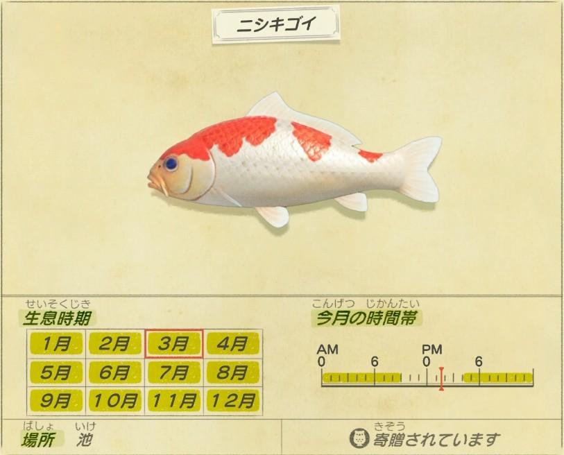 Nishiki-goi