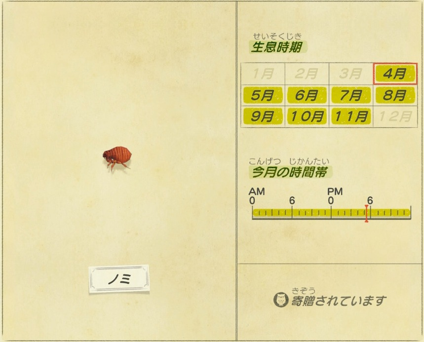 Nomi - flea