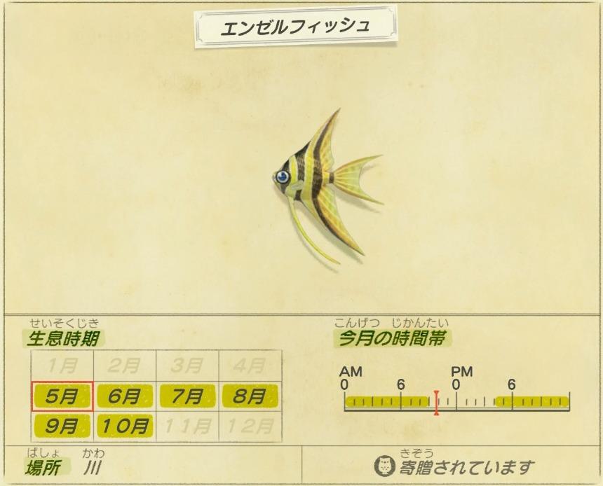 エンゼルフィッシュ - Angelfish