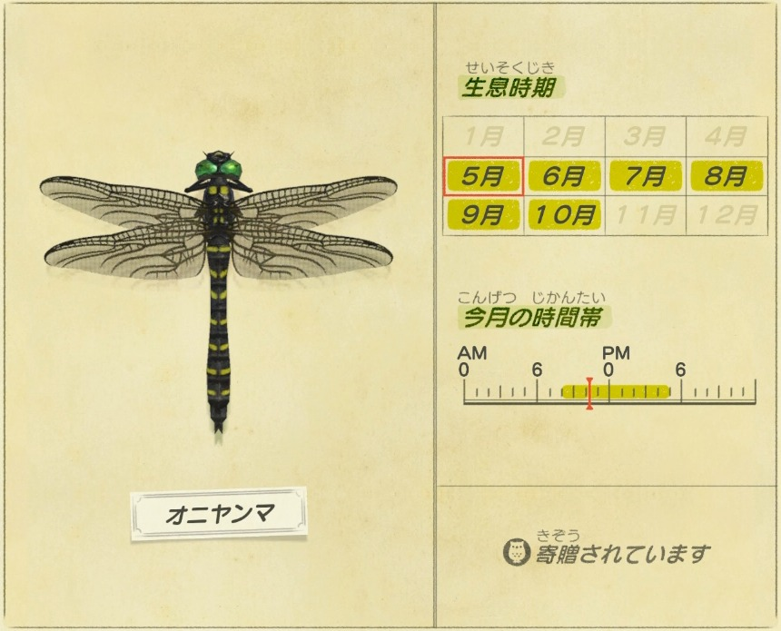 オニヤンマ - Golden-ringed-dragonfly