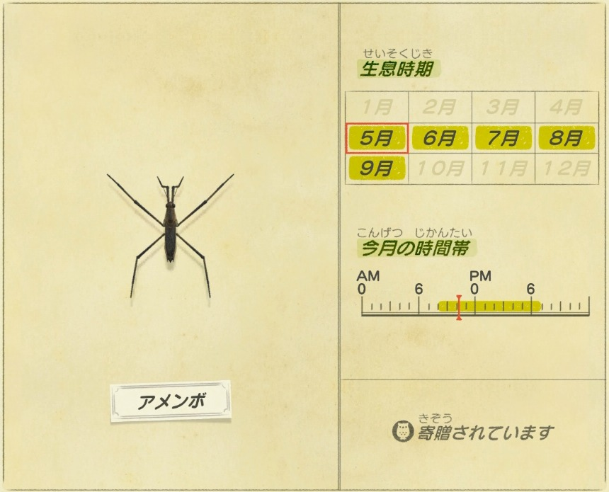 アメンボ - Water strider