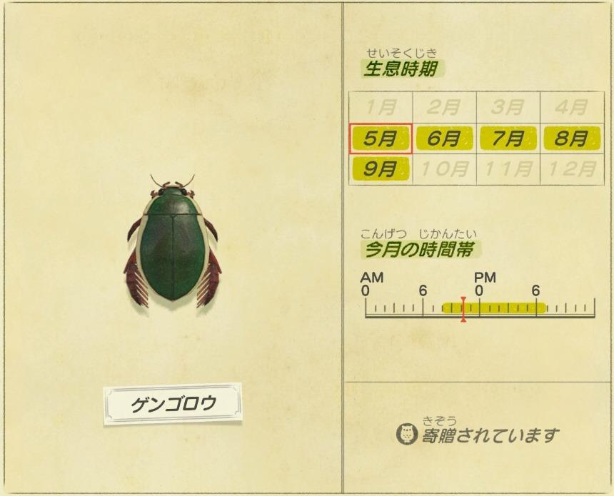 ゲンゴロウ - diving beetle