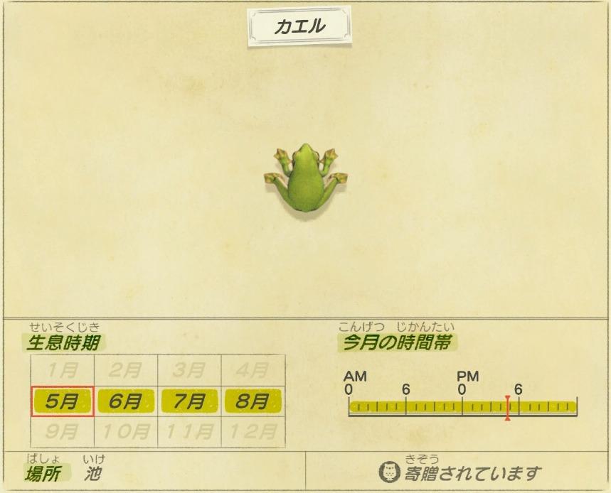 カエル - frog