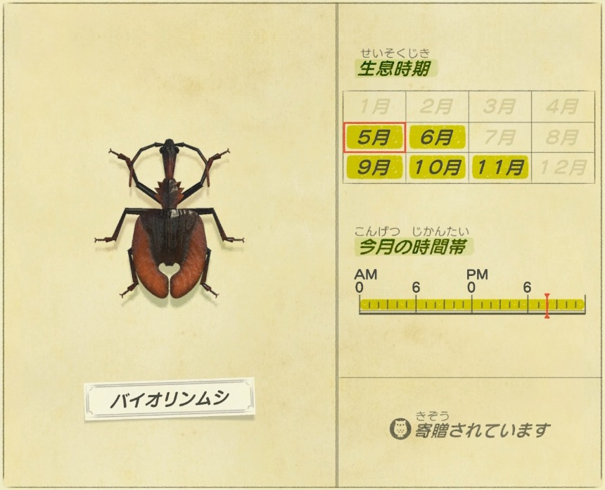 バイオリンムシ - Violin Beetle