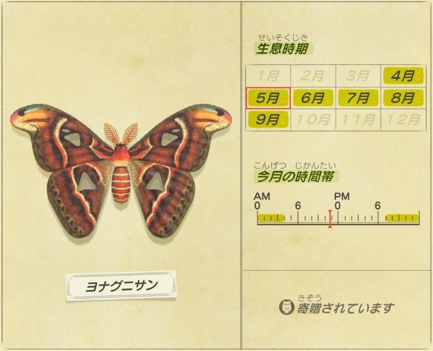 ヨナグニサン - atlas moth