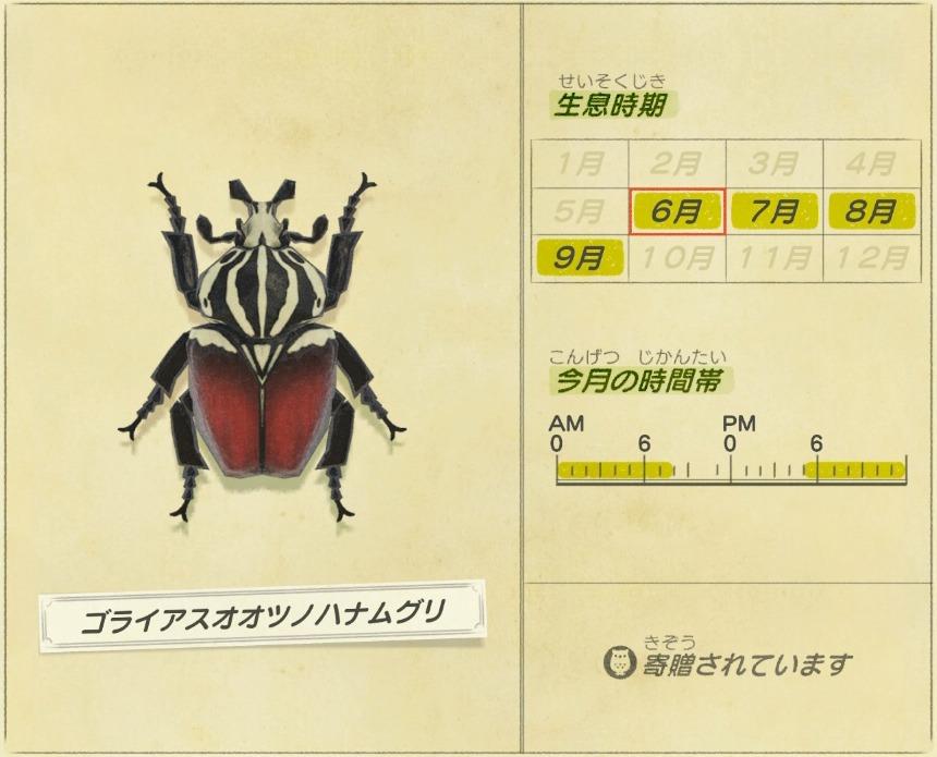 ゴライアスオオツノハナムグリ - Goliathus