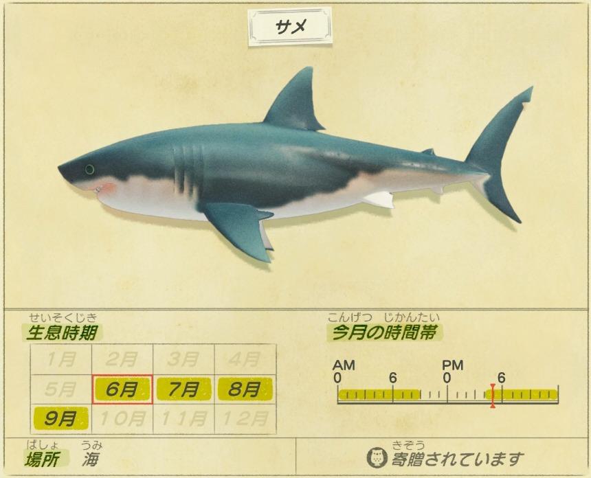 Same - Shark