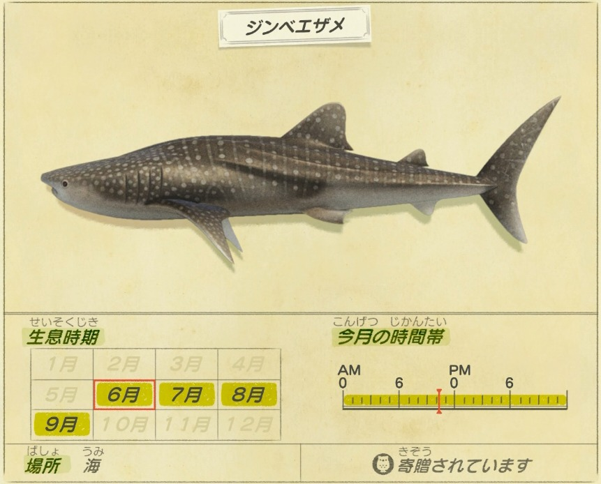 jinbe same - Whale shark