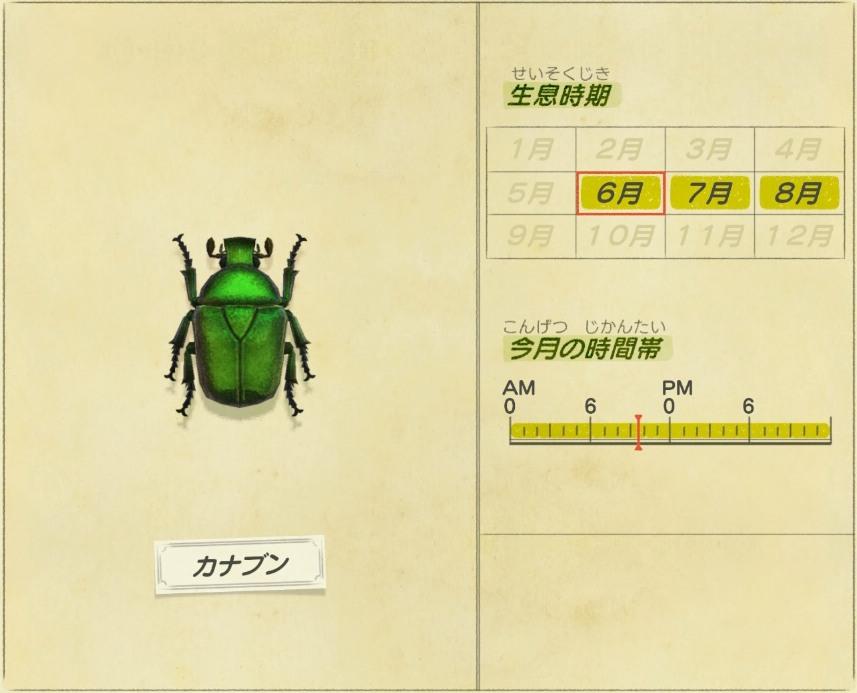 kanabun - Drone beetle