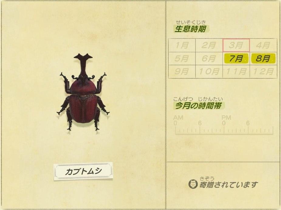 カブトムシ - beetle